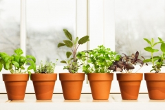 How to Create a Mini Herb Garden in Your Kitchen Picture