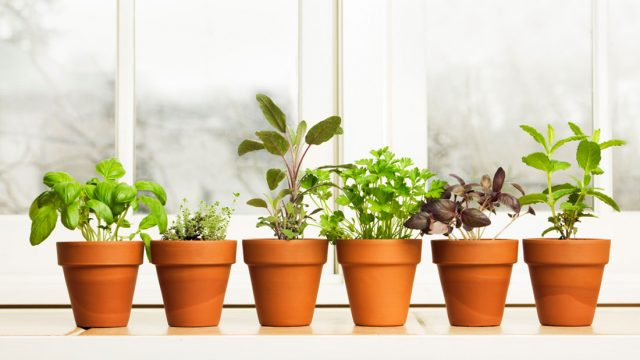How to Create a Mini Herb Garden in Your Kitchen