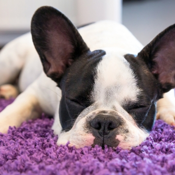 Tips to choose a pet friendly vacuum